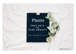 Plants that Help Ease Anxiety and Promote Rest